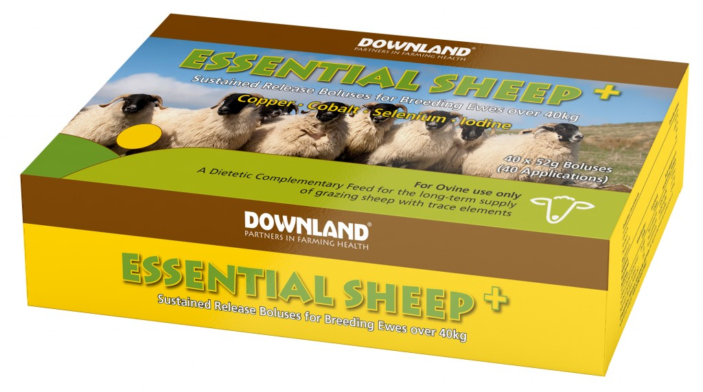 DL Essential Sheep +