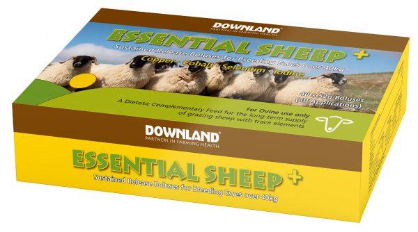 DL Essential Sheep +