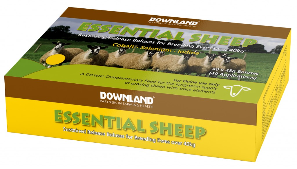 DL Essential Sheep