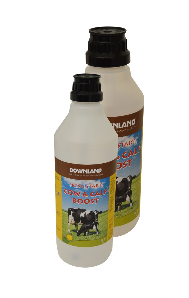 Downland group cow & calf