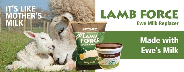 Lamb Force Web Bannner