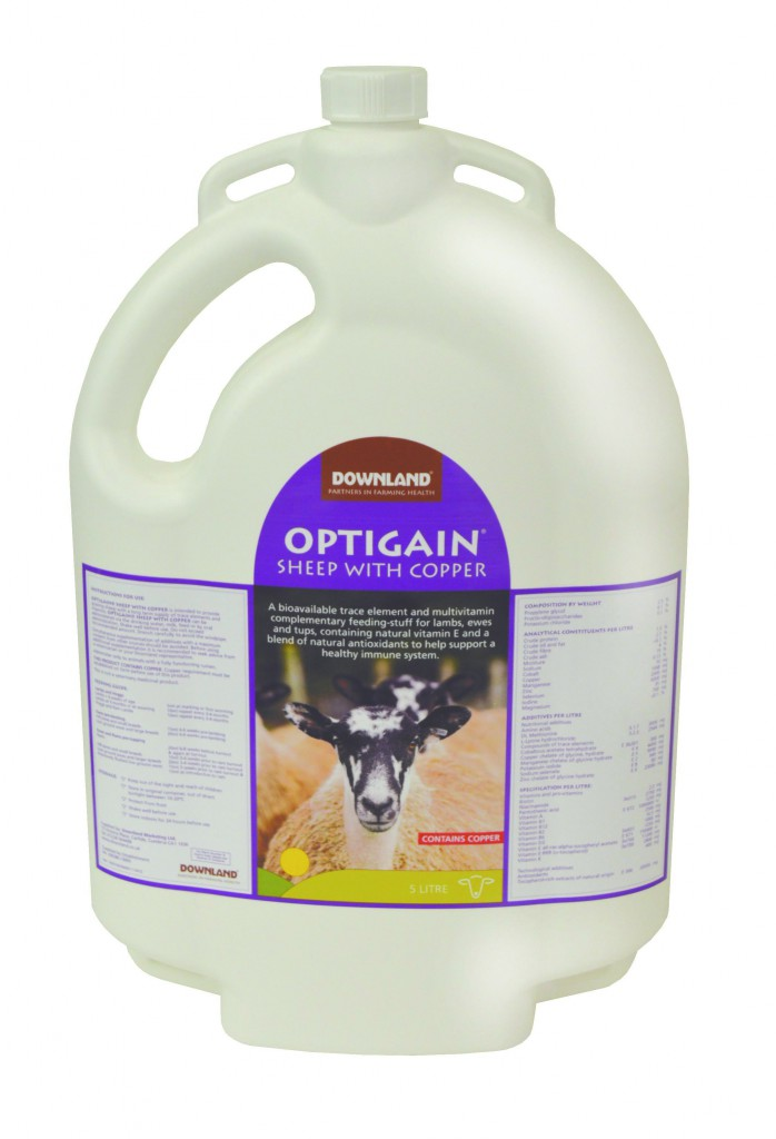 sheepwithcopper5l