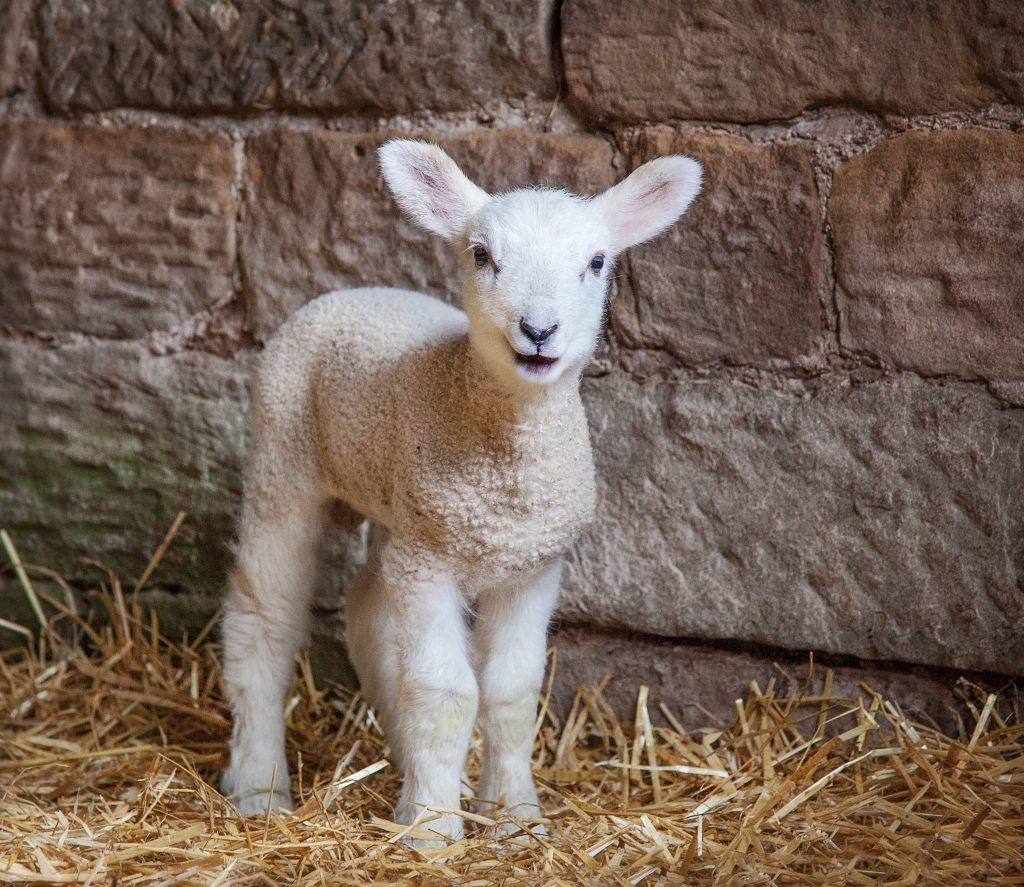 News - DownlandDownland | Downland specialises in agricultural