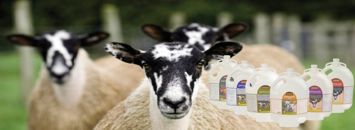 Optimise Pre-Tupping Nutrition