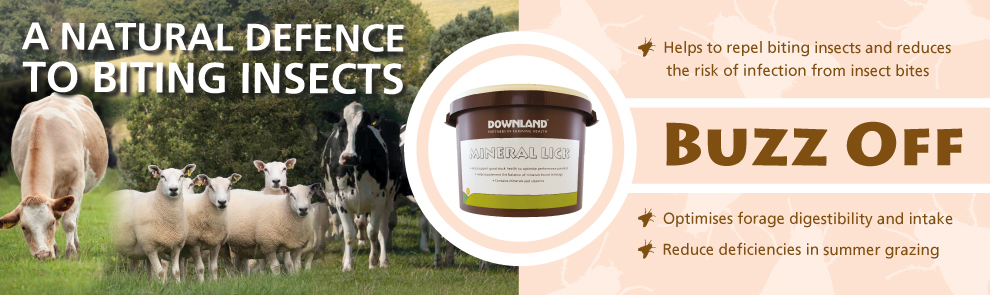 Web banner for Downland BUZZ OFF product.