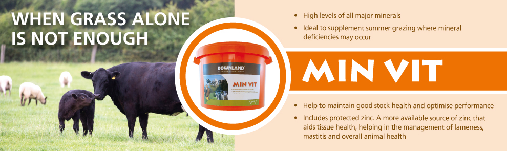 Web banner for MIN VIT product